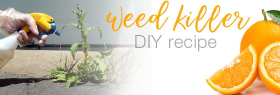 Natural Weed Killer Recipe