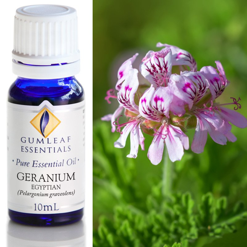 GERANIUM EGYPTIAN ESSENTIAL OIL