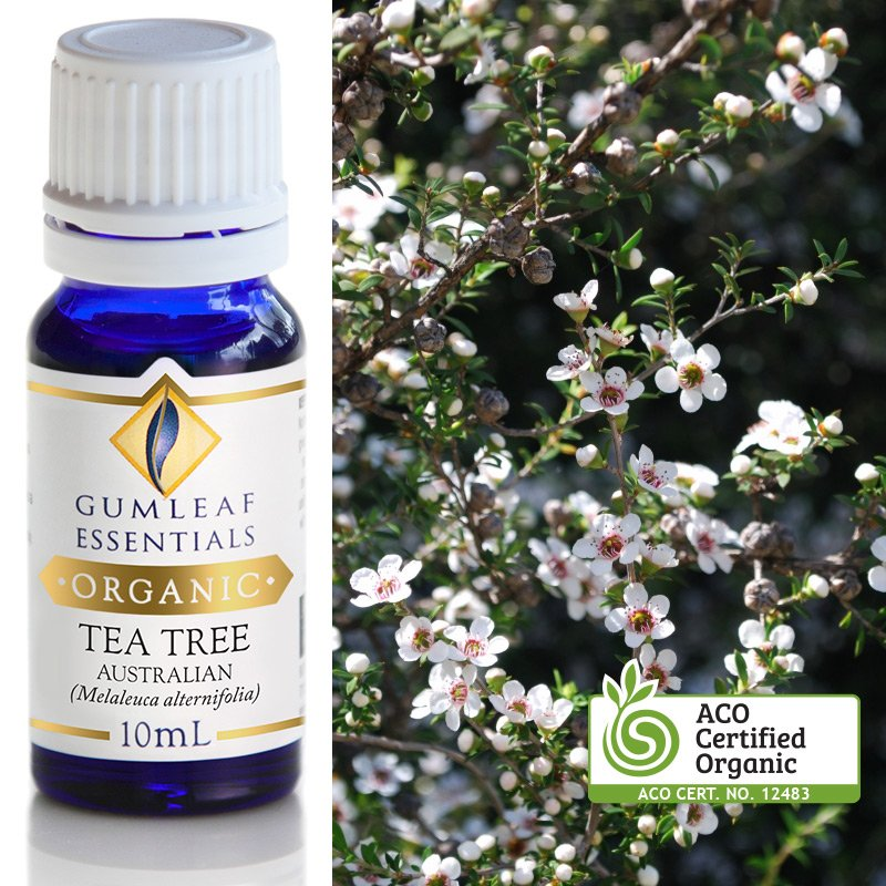ORGANIC TEA TREE AUSTRALIAN ESSENTIAL OIL