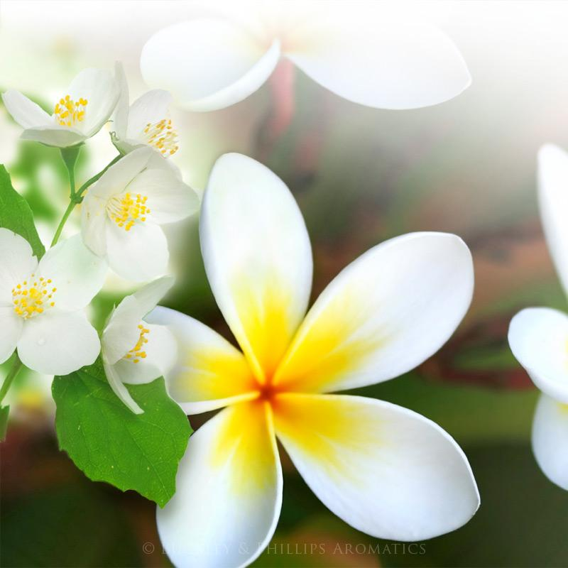 jasmine frangipani soap buckley phillips australia