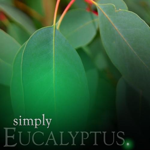 EUCALYPTUS PILLAR CANDLE