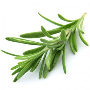 ROSEMARY SPANISH ESSENTIAL OIL