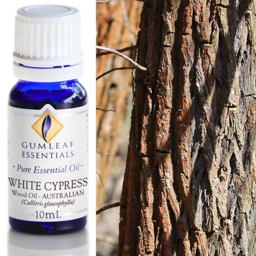 WHITE CYPRESS WOOD ESSENTIAL OIL